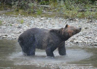 Campbell River Grizzly Bear Adventure Tours